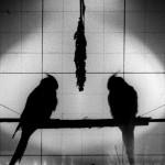 lab birds